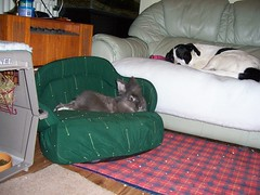 Blue and Jody relaxing photo by killaypetshop