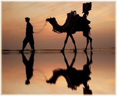 Colours and camel. photo by Iqbal.Khatri