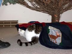 Arranging the Tree Skirt
