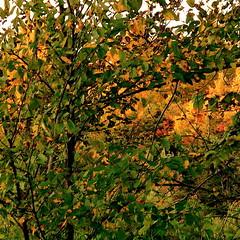Autumn in summer! / Automne en été! photo by Denis Collette...!!!