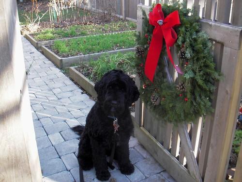 skippy and garden wreath