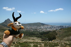 Teddybok gets a close up view of Table Mountain (by Dave Reinhardt)