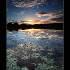 Lily Pad Sunset photo by angus clyne