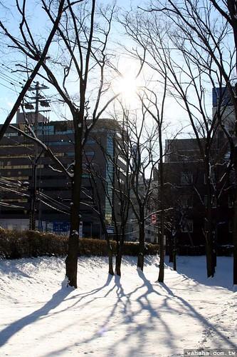 北海道大學 Hokkaido University