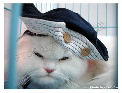 戴帽子的貓