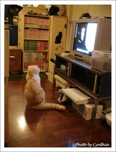 繼續看電視