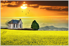 The yellow plain photo by Jean-Michel Priaux