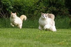 Romping Through the Grass photo by flying cats (AKA Penny Carlson)