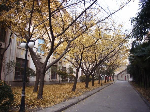 Ginkgo-Tree-SJTU-2