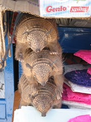 Stack of Armadillos, obviously!