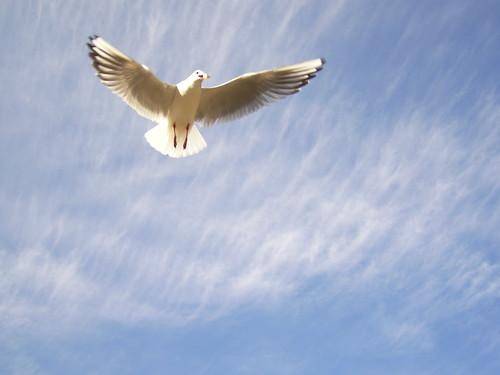 自分でエサをとるためにも、翼(運転免許)が欲しいわ
