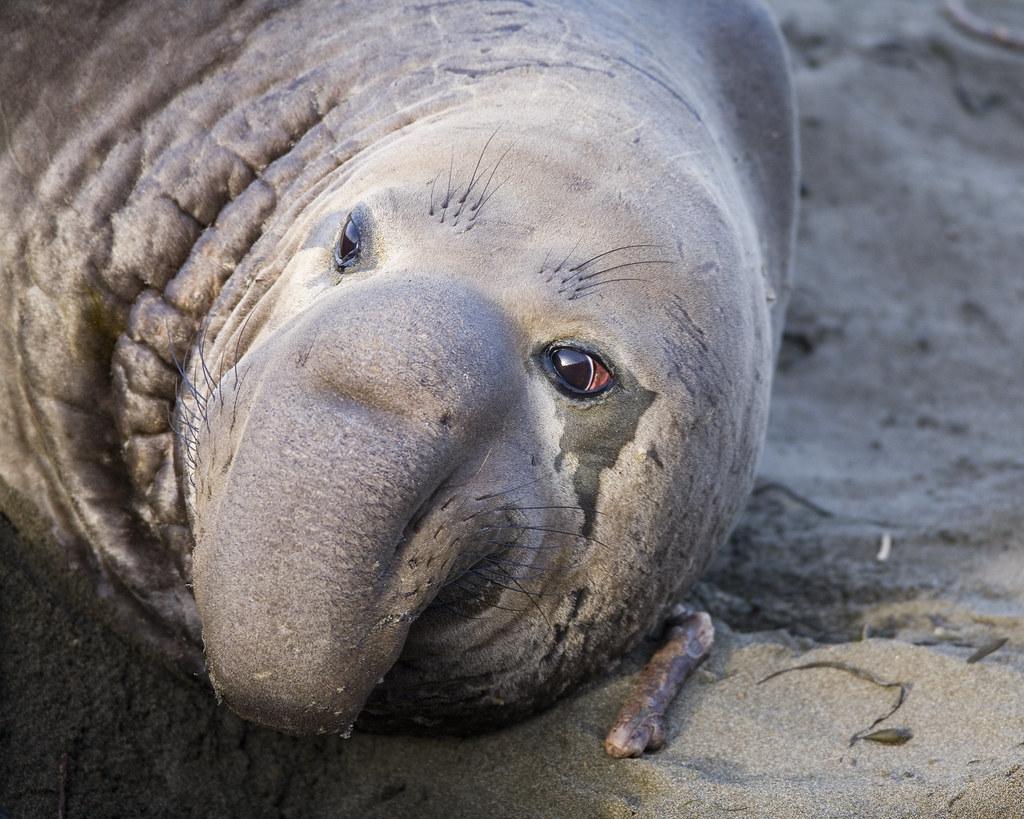 Marine mammals pictures - photo#3
