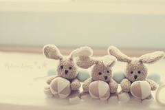 Bunnies (158/365) photo by Rebe {happy-mami}