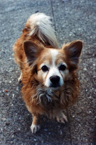 Help deze honden aan een thuis!