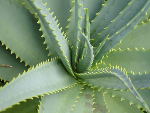 Les merci aux plantes d polluantes for Plante aloe vera chambre