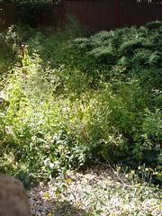 short weeds, tall weeds
