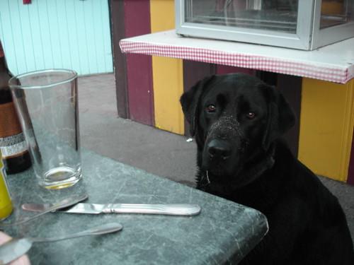 Bolinas wet dog