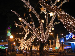 Lighted Trees with Star Fruits