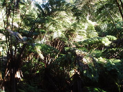 Rainforest, Showing Undergrowth