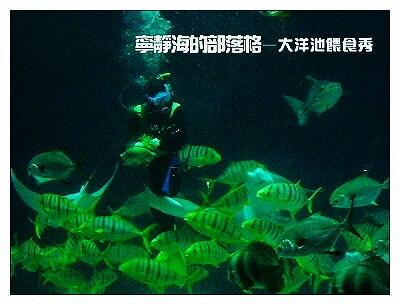 夏季感冬之旅_0117_海生館大洋池餵食秀