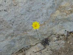 Resultado de imagen de nace la flor en la roca
