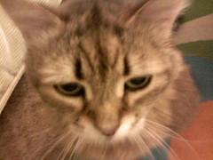 Ethel, 12/06/06