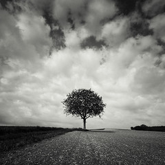 The Single Tree photo by Martin Gommel