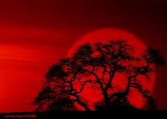 red red sky with tree photo by coral.hen4800