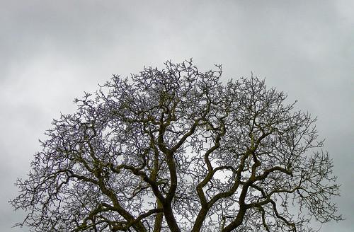 Brain tree?