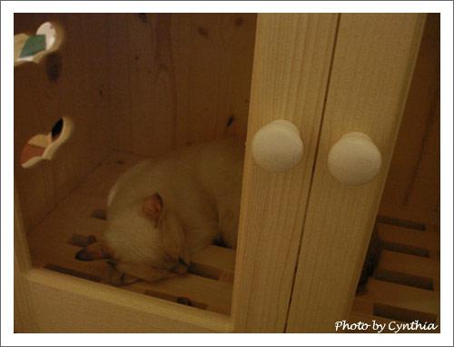Sora在烘毛箱裡睡