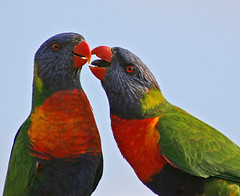 Give us a kiss Sweetie photo by aussiegall