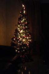 Chrismastree at Night