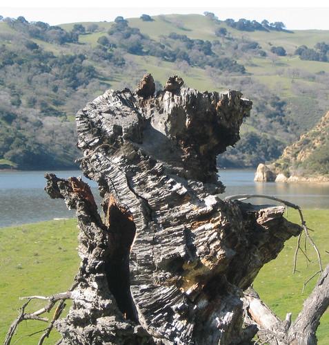 Impressive stump