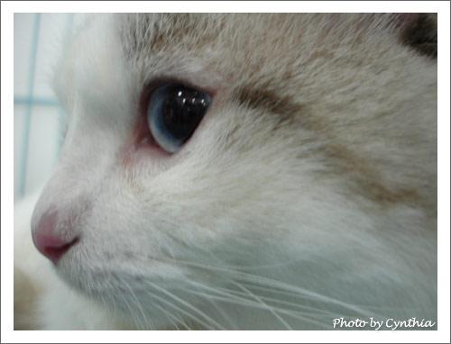 LEO的大眼睛