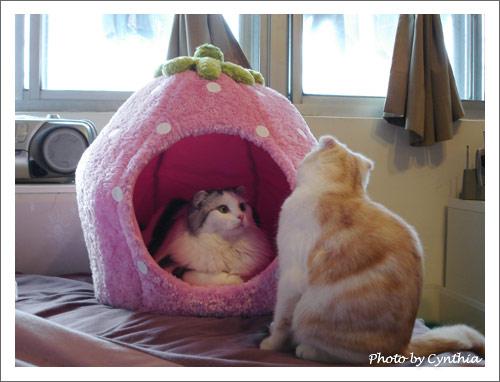 草莓窩之1