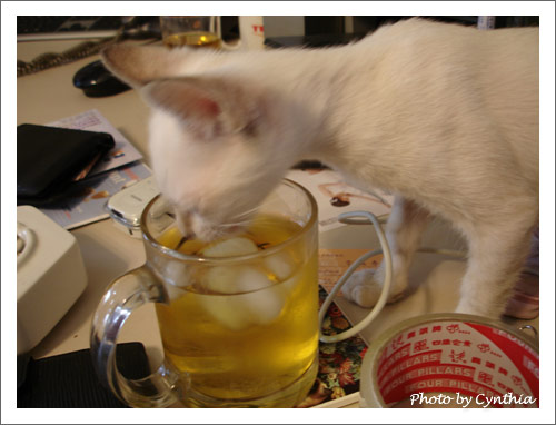 偷喝綠茶犯罪現場