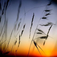 Grasses photo by una cierta mirada
