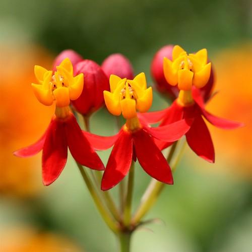 Canlı Renkli Resimler