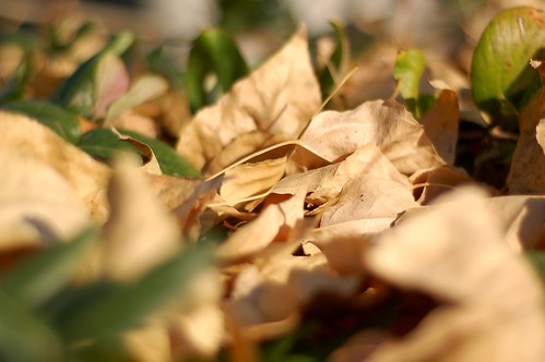 dead leaves, new leaves