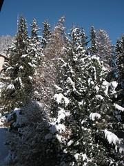 St. Moritz: ein verschneites Waldstück