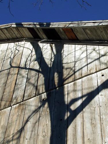 barn tree