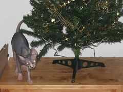 Dragonheart and the Christmas tree