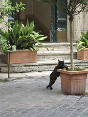 The Black Cat of Rome photo by Rob Shenk