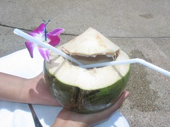 coconut in hua hin (by kapsi)