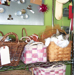 Craft room cat storage photo by Skitzo Leezra