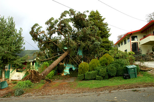 Seattle Windstorm