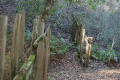 4a. Fence Line Photo