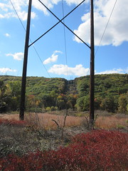 under the crackling powerlines photo by Ellen Bulger