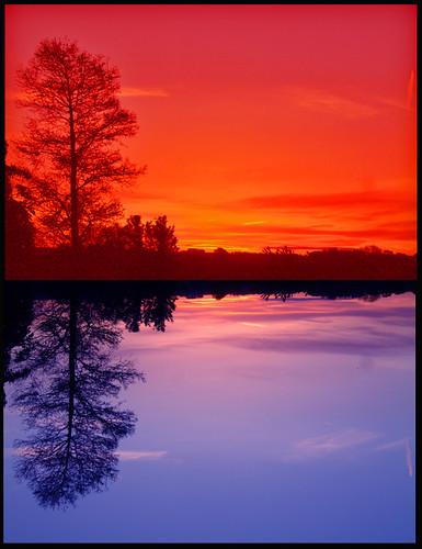 Canl� Renkli Resimler