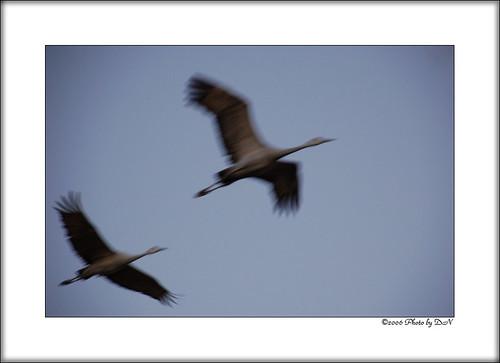 crane fast
